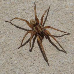 Уничтожение пауков в Красногорске